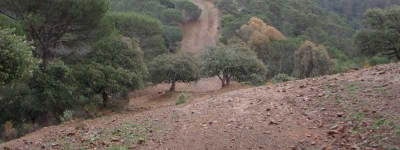 Ruta BTT a los Montes de Málaga Llanos del Médico subiendo a Jotron